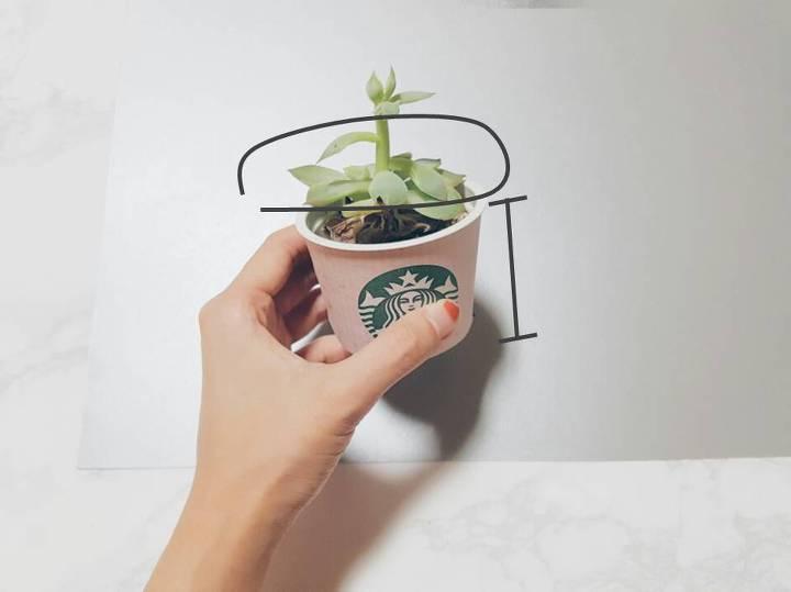 植木鉢は話題のスタバのプリンカップなどでもOK!